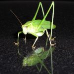 grasshopper-1912_640